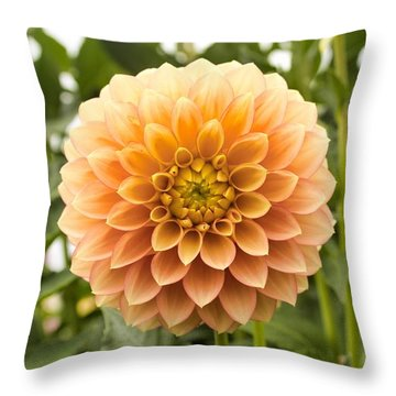 Throw Pillow featuring the photograph Sunny Dahlia by Brian Eberly