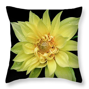 Throw Pillow featuring the photograph Sunny Dahlia by Julie Palencia
