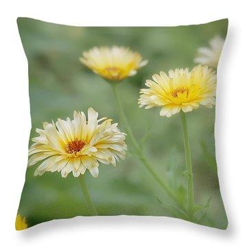 Sunny Daze Throw Pillow