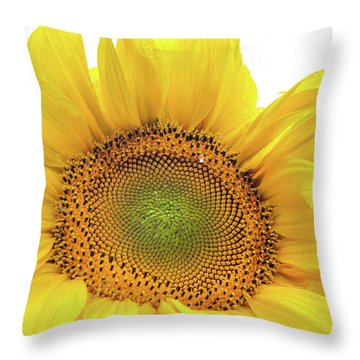 Throw Pillow featuring the photograph Sunny Flower 1 by Jenny Rainbow