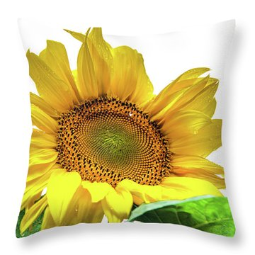 Throw Pillow featuring the photograph Sunny Flower by Jenny Rainbow