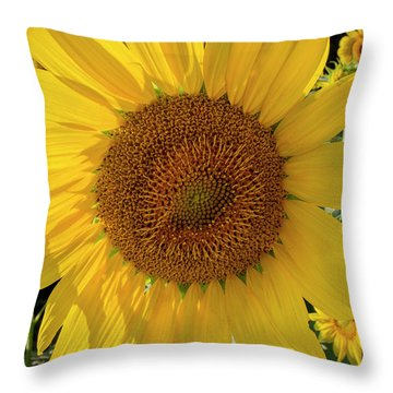 Throw Pillow featuring the photograph Sunny Side Up by Chris Scroggins