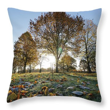 Sunrise Through Lime Trees Throw Pillow