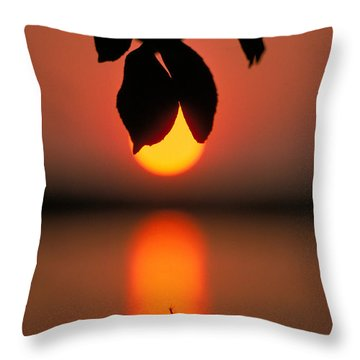 Sunset And Spider Throw Pillow by Thomas Firak