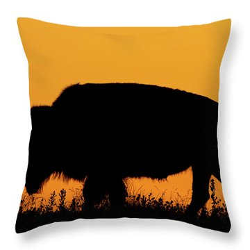 Sunset Bison 2 Throw Pillow