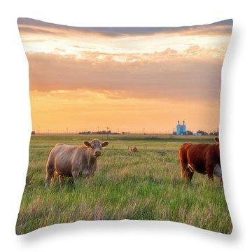 Sunset Cattle Throw Pillow