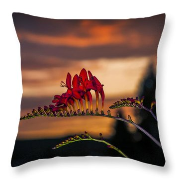 Sunset Crocosmia Throw Pillow