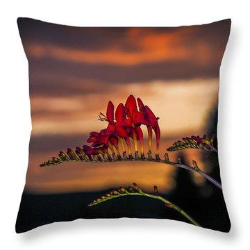 Sunset Crocosmia Throw Pillow
