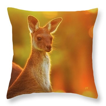 Sunset Joey, Yanchep National Park Throw Pillow by Dave Catley