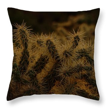 Sunset Kissed Cholla Throw Pillow
