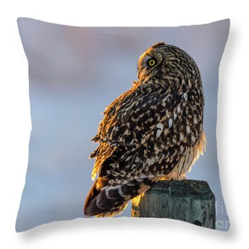 Sunset Short-eared Owl Throw Pillow