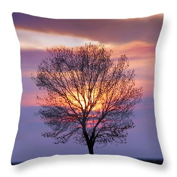 Sunset Tree In The San Joaquin Valley, California Throw Pillow by Wernher Krutein