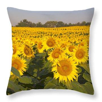 Sunshine Flower Field Throw Pillow