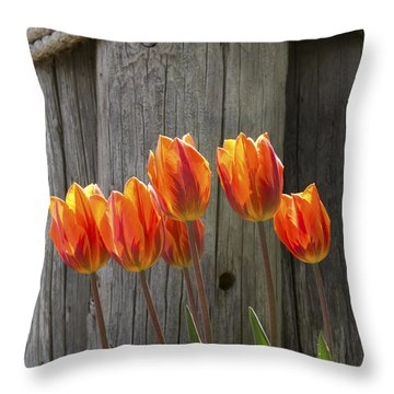 Throw Pillow featuring the photograph Sunshine by Heather Kenward
