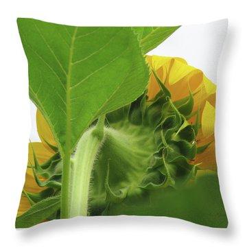Sunshine In The Garden 16 Throw Pillow by Brooks Garten Hauschild