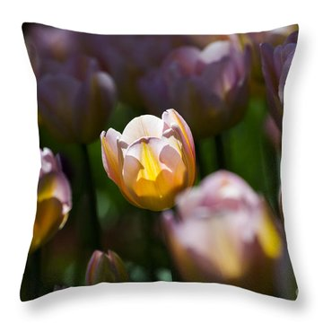 Throw Pillow featuring the photograph Sunshine Tulips by Angela DeFrias