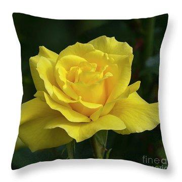 Sunsprite Rose 2 Throw Pillow