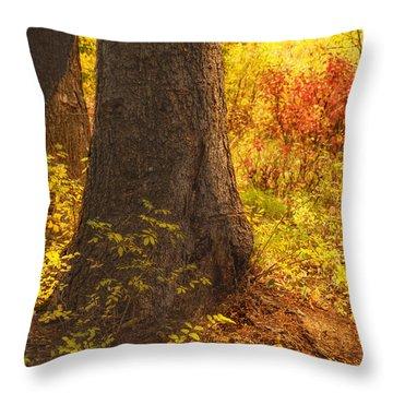 Sunstream Throw Pillow