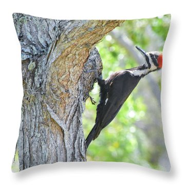Surprised By Pileated Throw Pillow