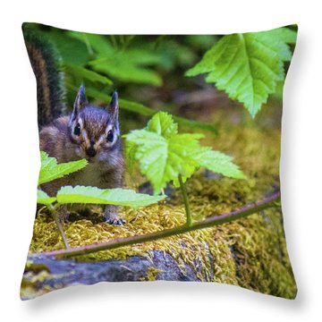 Throw Pillow featuring the photograph Surprised Chipmunk by Jonny D