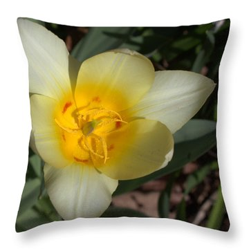 Surprising Sunny Tulip Throw Pillow by Liz Allyn