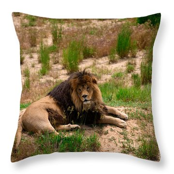 Throw Pillow featuring the photograph Survivor by Sandy Molinaro
