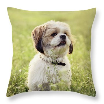 Sute Small Dog Throw Pillow
