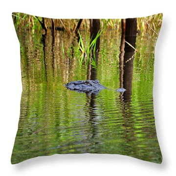 Throw Pillow featuring the photograph Swamp Stalker by Al Powell Photography USA
