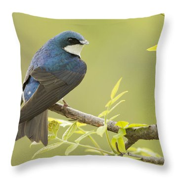 Swallow Throw Pillow by Mircea Costina Photography