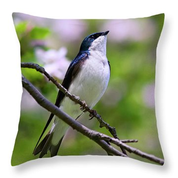 Swallow Song Throw Pillow by Christina Rollo