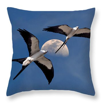 Swallow Tail Kites In Flight Under Moon Throw Pillow by Justin Kelefas