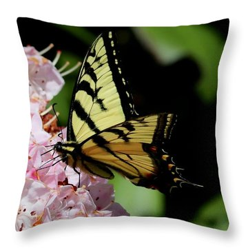 Swallow Tail On Mountain Laurel Throw Pillow