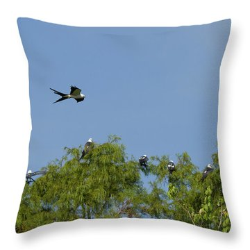 Swallow-tailed Kite Flyover Throw Pillow