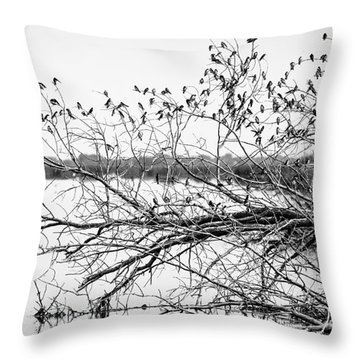 Throw Pillow featuring the photograph Swallows At Horicon Marsh  by Ricky L Jones