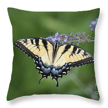 Swallowtail 20120723_24a Throw Pillow by Tina Hopkins