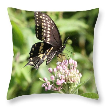 Swallowtail Butterfly 3 Throw Pillow