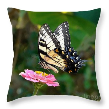 Swallowtail Butterfly 3 Throw Pillow by Sue Melvin