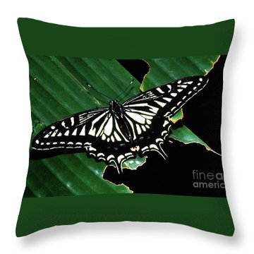 Swallowtail Butterfly- Close Throw Pillow