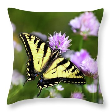 Swallowtail Butterfly Dream Throw Pillow by Christina Rollo