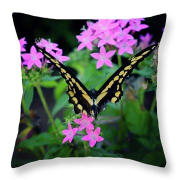 Throw Pillow featuring the photograph Swallowtail Butterfly Rests On Pink Flowers by Toni Hopper