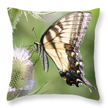 Swallowtail Delight Throw Pillow