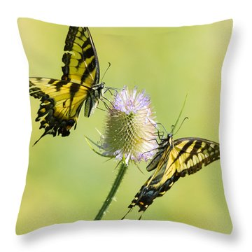 Swallowtails On Thistle  Throw Pillow