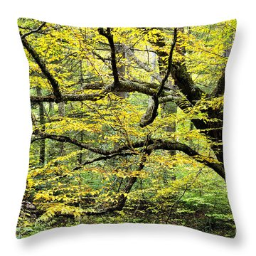 Swamp Birch In Autumn Throw Pillow by Thomas R Fletcher