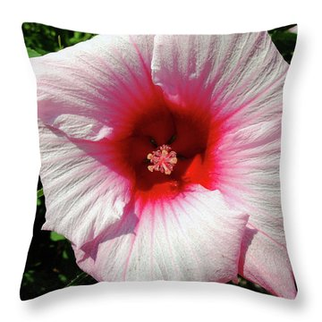 Throw Pillow featuring the photograph Swamp Mallow Hibiscus by Scott Kingery