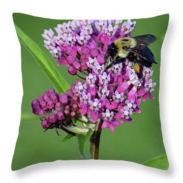 Showy Milkweed Throw Pillows