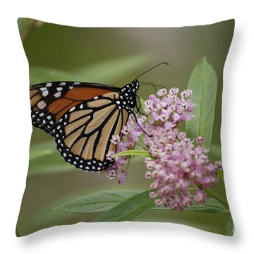 Swamp Milkweed Monarch Throw Pillow