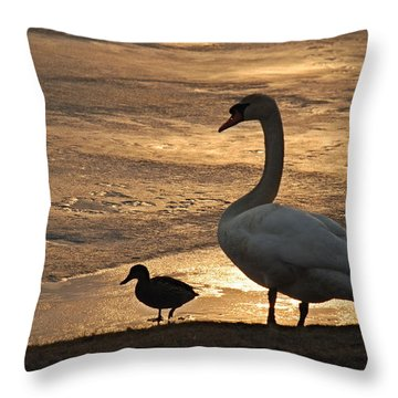 Throw Pillow featuring the photograph Swan And Baby At Sunset by Richard Bryce and Family