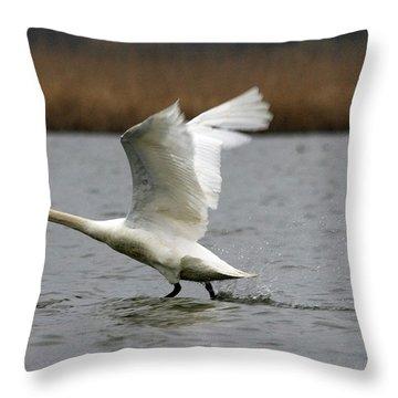 Swan During Take Off Throw Pillow