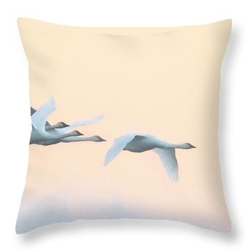 Swan Migration  Throw Pillow by Kelly Marquardt