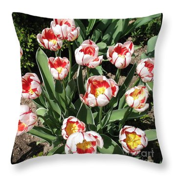 Throw Pillow featuring the photograph Swanhurst Tulips by Jolanta Anna Karolska